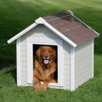 Šuo. 10 patarimų