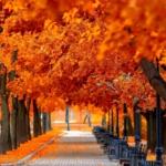 10 patikrintų grožio patarimų rudeniui