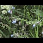 Maistas ir vaistai gamtoje vasaros viduryje