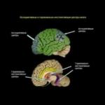 Žmogaus smegenų valdymas (lietuviškas įgarsinimas). Sergejus Saveljevas.