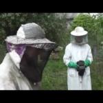 Bitės darbštuolės – medus, vaškas, žiedadulkės, bičių pikis