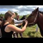 Pasirokavimai apie žemaitukų žirgus