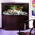 Akvariumų konstrukcijos