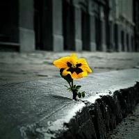 Vienatvė gali susargdinti