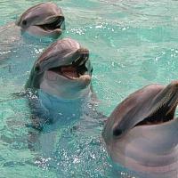 Prisipažinti meilėje padės delfinai