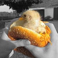 Hamburgerio istorija
