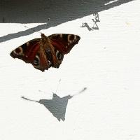 Mažas drugelis