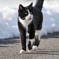 Katinui