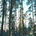 Medžioklė - Adutiškio girininkijoje
