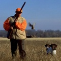 Kaip žvėrių padarytus nuostolius apmoka medžiotojai