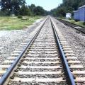 Kad Europos standarto geležinkelio linija neužtvertų žvėrių migracijos kelių