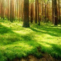 Miškų grobstymai