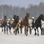 """Tradicinės respublikinės ristūnų žirgų žiemos lenktynės ,,Sartai"""" Dusetose"""