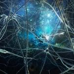 Nervų sistema – sveikatos ir gerovės pagrindas
