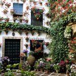 Naudingi patarimai auginatiems kambarines gėles
