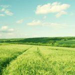 Lietuvos žemės ūkio vystymo vizija
