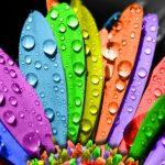 Kokios spalvos tavo meilė?